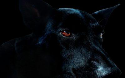 Peur du chien noir?